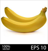 Two bananas in batch photo realistic vector illustration — Stock Vector