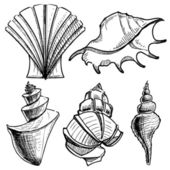 Sea shells collection. Hand drawing sketch vector illustration — Stock Vector