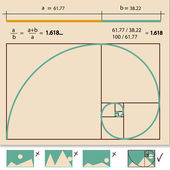 Golden ratio — Stock Vector