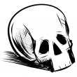 Skull isolated on white — Stock Vector