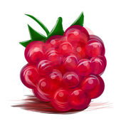 Juicy raspberry isolated on white — Stock Vector