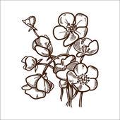 Daisy flower isolated on white. — Stock Vector