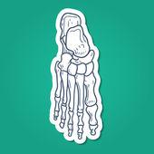 Bones of foot. Skeleton part. — Stock Vector