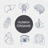 Human organs collection. — Stock Vector