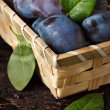 Fresh plums. — Stock Photo