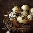 Quail eggs. - Stock Photo