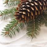 Pine cone. — Stock Photo