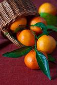 Tangerines. — Stock Photo