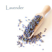 Lavender. — Stock Photo