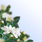 Floral achtergrond. — Stockfoto