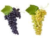 Grape. — Stock Photo