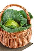 Cabbage. — Stock Photo