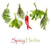 Spicy herbs. — Stock Photo