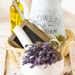 Provence lavender. — Stock Photo