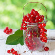 Redcurrant berries. — Stock Photo