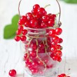 Stock Photo: Redcurrant.