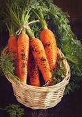 Zanahorias. — Foto de Stock