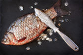 Fresh carp. — Stock Photo