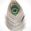 Royalty-Free Stock Vector Image: Abstract peacock feather