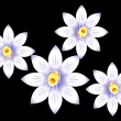 Abstract white lilly flower - 