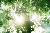 Sun rays in between the green foliage — Stock Photo