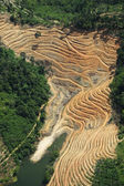 Excavated forest for agriculture - arial view — Stock Photo