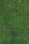 Green grass after trim background — Stock Photo
