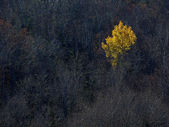 Yellow Tree Leaves Dark Contrast — Stock Photo
