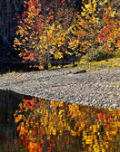 Autumn Colors Water Reflection — Stock Photo