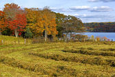 Hay Rows Autumn Colors — Stock Photo