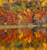 Reflection Autumn Colors Water — Stock fotografie