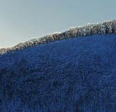 冬季蓝天绿树 — 图库照片
