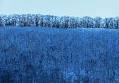 Winter Blue Trees Sky — Foto de Stock