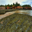 HDR St Martins Caves Seaweed — Stock Photo