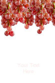 Grappe de raisin — Photo