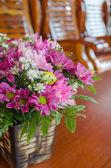 Close up flower — Stock Photo