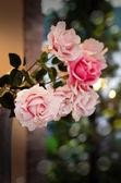 Plastic rose — Stock Photo