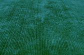 Green sidewalk — Stockfoto