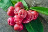 rose apple on wooden background — Stock Photo