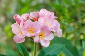 Fresh  flowers — Stock Photo