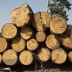 Wood logs — Stock Photo #26741263