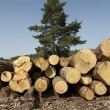 Wood logs — Stock Photo #26740947