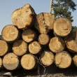 Wood logs — Stock Photo #26741263