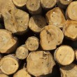 Wood logs — Stock Photo #26741515