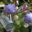 Teapots of colors hung by the branches of a tree in Christmas — Stock Photo