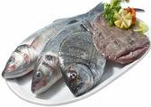 Urval av färsk rå fisk — Stockfoto