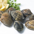 Fresh Clam — Stock Photo #16952573