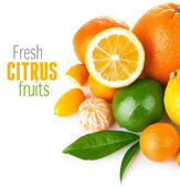 新鲜柑橘水果与绿叶 — 图库照片