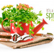 Green plants in red watering can with garden tool — Stock Photo
