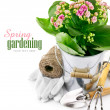Stock Photo: Spring flower in bucket with garden tool and gloves